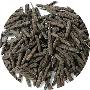 Pippali – Long pepper – Piper longum