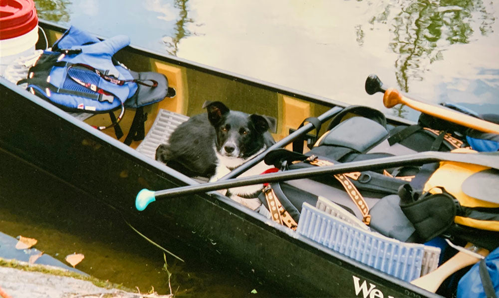 dog waiting for command in canoe