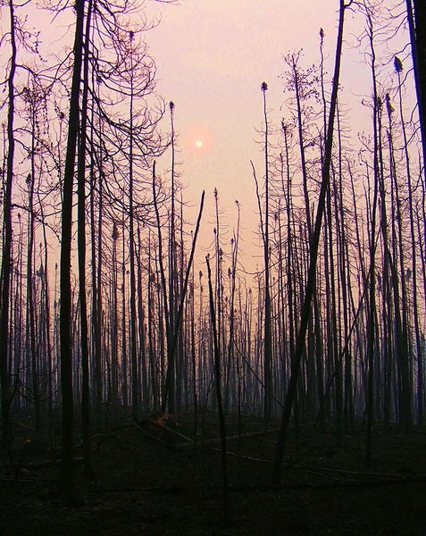 forest fire tree silhouette