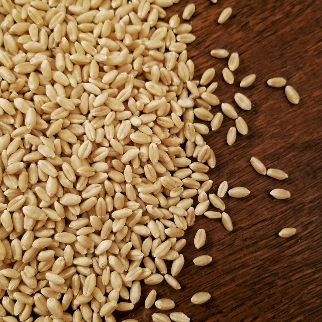 White Whole Wheat Berries | 50 LBS