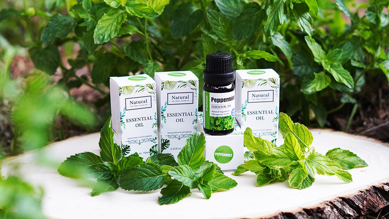 What is Peppermint Oil and How To Use it