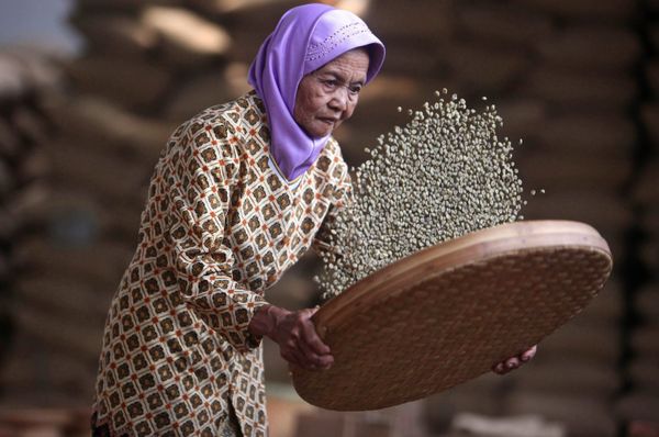 Coffee Harvest in Indonesia to Tumble From Record on El Nino