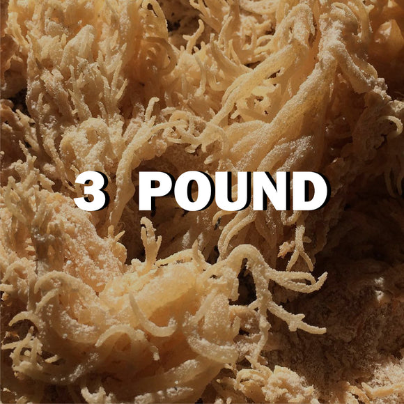 Raw Sea moss 3Lbs - SupherbBotanicals
