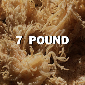 Raw Sea moss 7Lbs - SupherbBotanicals
