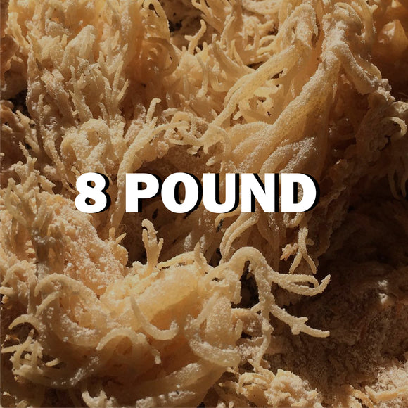 Raw Sea moss 8Lbs - SupherbBotanicals