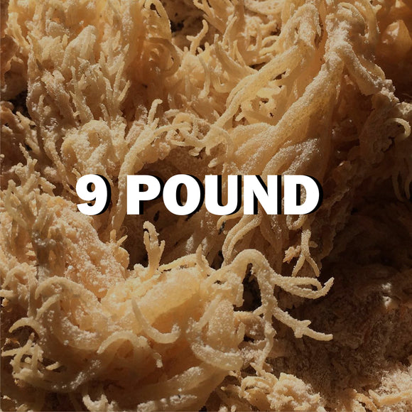 Raw Sea moss 9Lbs - SupherbBotanicals