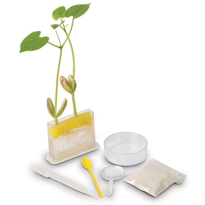 Mrs Green | Root Science Kit