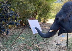Paintings made by elephants at our elephant park and clinic in Chiang Mai, Thailand.