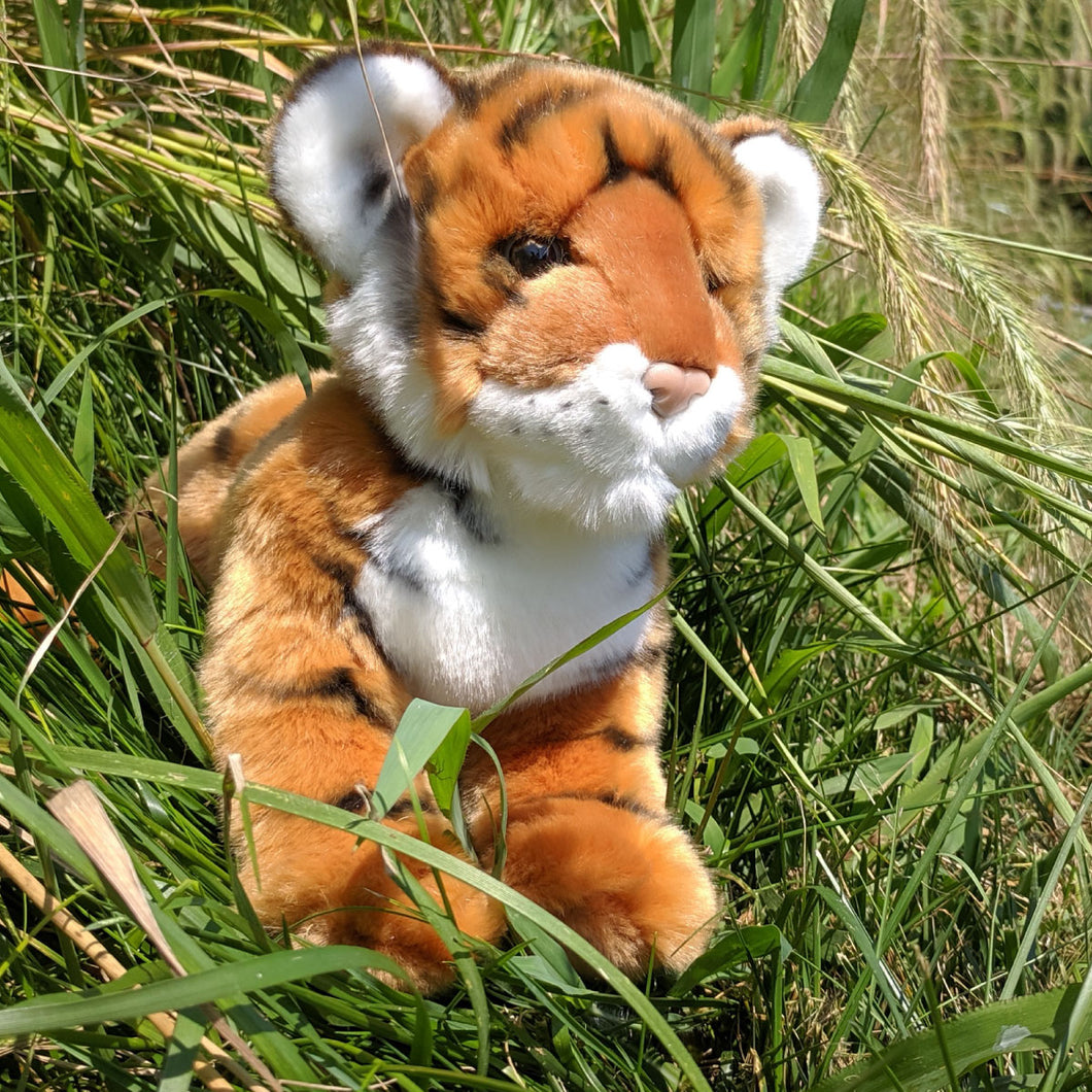 Pancake the Bengal Tiger Cub from Douglas