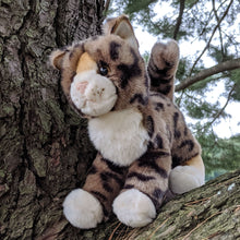 Load image into Gallery viewer, Tashet the Bengal Cat from Douglas Cuddle Toys