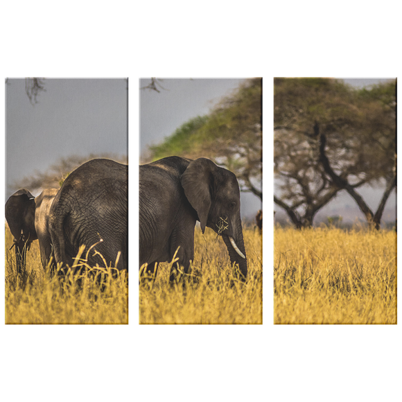 Set of 3 Canvas Elephant Wall Art African Wildlife Safari Elephant Canvas Print Living Room Wall Art Home and Office Decor