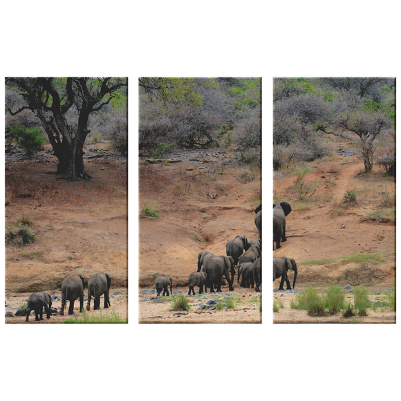 3 Set Canvas African Elephants Wall Art Elephant Animal Canvas African Safari Living Room Wall Art Home and Office Decor