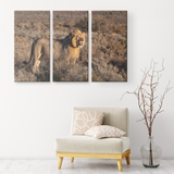 3 Set Canvas Lion Print Wall Art African Safari Wildlife Animal Lion Canvas Living Room Wall Art Home and Office Decor