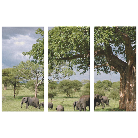 3 Set Canvas Elephant Wall Art African Tree Canvas Art African Safari Wildlife Animals Living Room Wall Art Home and Office Decor