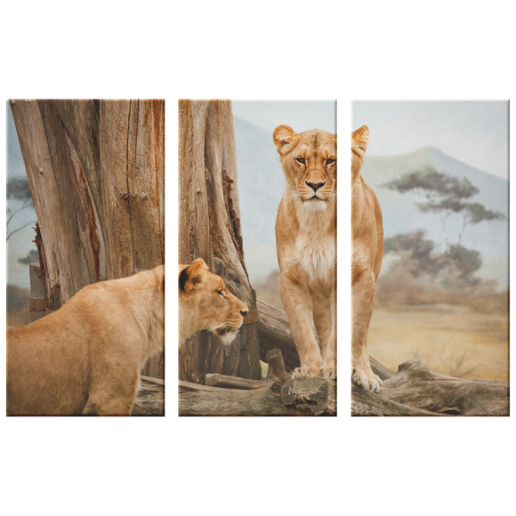 3 Set Canvas African Lion Wall Art Safari Wildlife Canvas Wall Art Print Living Room Wall Art Home and Office Decor