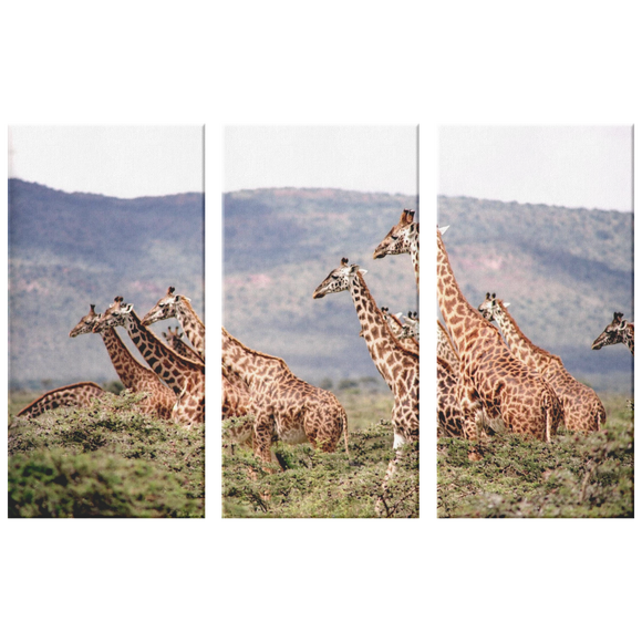 3 Set Canvas Giraffe Wall Art African Wildlife Giraffes African Safari Animals Canvas Wall Art Living Room Wall Art Home and Office Decor