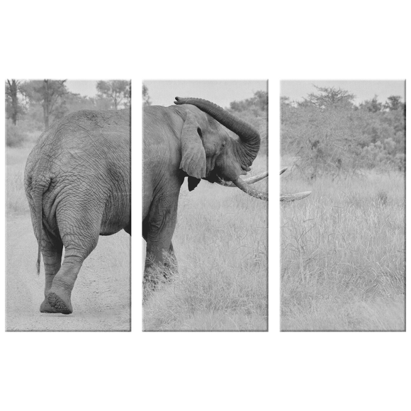 3 Set Canvas Elephant Wall Art African Safari Canvas Print Living Room Wall Art Home and Office Decor