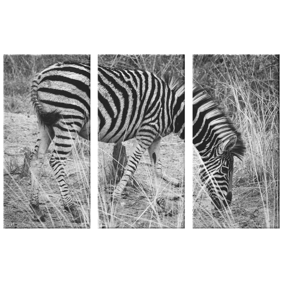 3 Set Canvas Zebra Print Wall Art Grayscale African Safari Zebra Canvas Living Room Wall Art Home and Office Decor