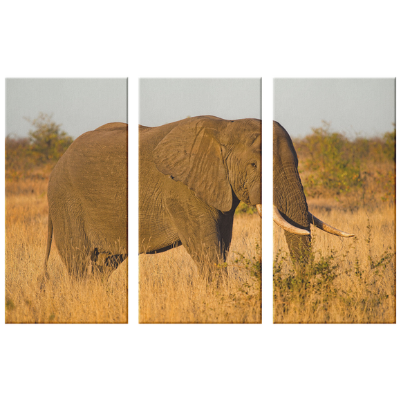 3 Set Canvas Elephant Animal Canvas Wall Art African Wildlife Safari Wall Art Living Room Wall Art Home and Office Decor