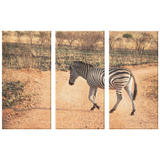 3 Set Canvas African Zebra Safari Wall Art African Wildlife Canvas Art Living Room Wall Art Home and Office Decor