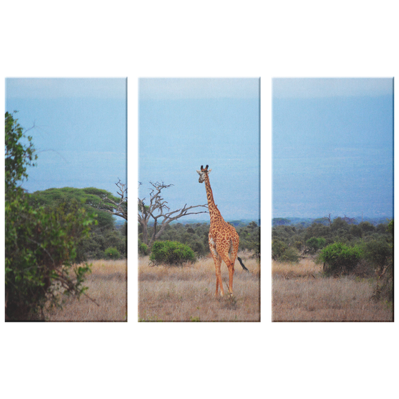 3 Set Canvas Giraffe Wall Art African Safari Wall Art Living Room Wall Art Home and Office Decor