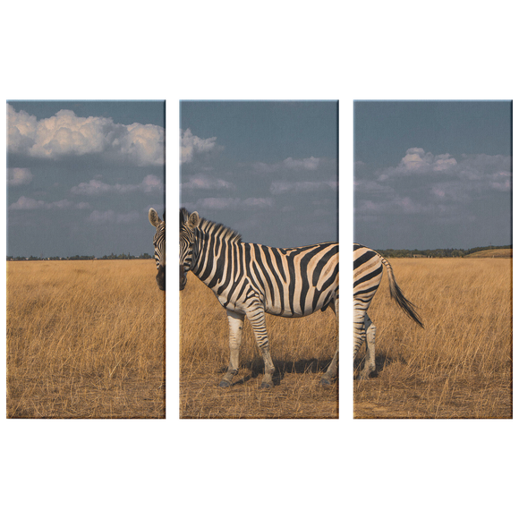 3 Set Canvas African Zebra Safari Wall Art Living Room Wall Art Home and Office Decor