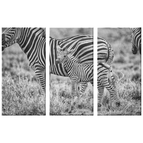 3 Set Canvas Zebra Family Wall Art Grayscale Zebra Canvas Living Room Wall Art Home and Office Decor