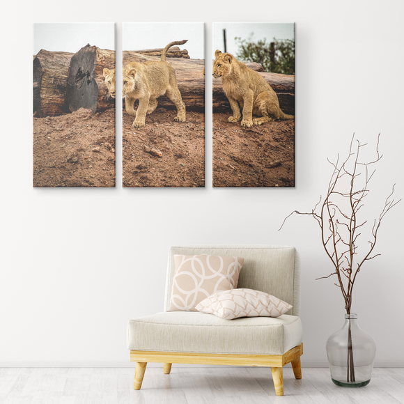 Set of 3 Canvas Lion Wall Art African Safari Wildlife Animals Canvas Living Room Wall Art Home and Office Decor