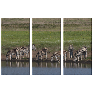 3 Set Canvas Zebra Family by the Water African Safari Wall Art Living Room Canvas Home and Office Decor