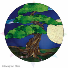 Load image into Gallery viewer, Bonsai at Night