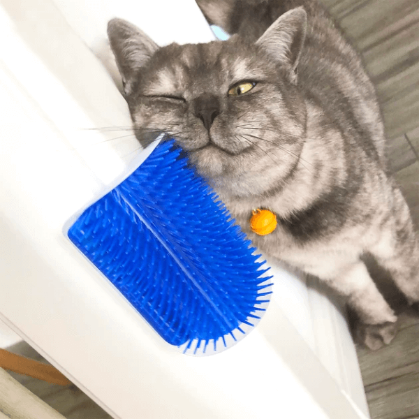 A gray cat is rubbing his face against a Cat Corner Brush attached to the corner of a wall.