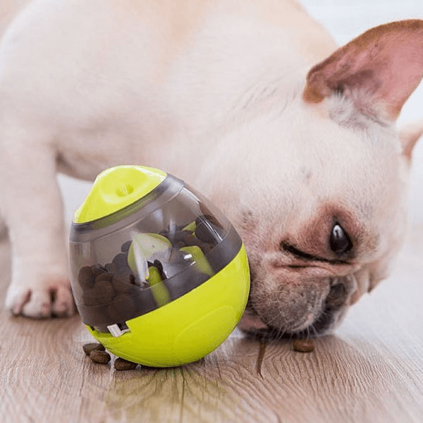 A Pug dog eating treats on the floor that falls through the hole under the Ball dispenser