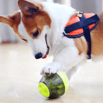 A Corgi dog touching the ball dispenser with his paw trying to figure out how to get the teats inside