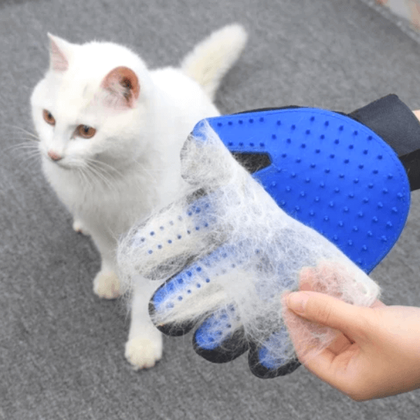 A white cat is sitting on the floor while the owner removes the white shedding hair of the cat from the Pet grooming glove that is wearing and that has used on the cat. The loosen white hair are easily removed from the glove wore with the other free hand in one move.