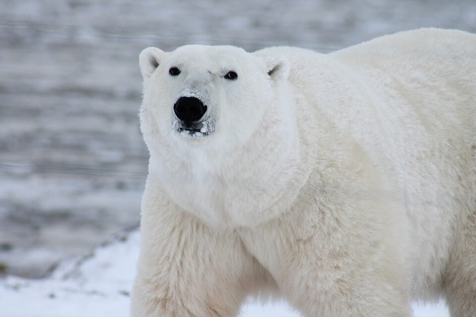 photos-animaux-ours
