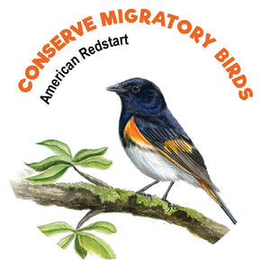 American Redstart Tattoo