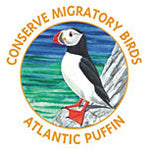 Atlantic Puffin tattoo