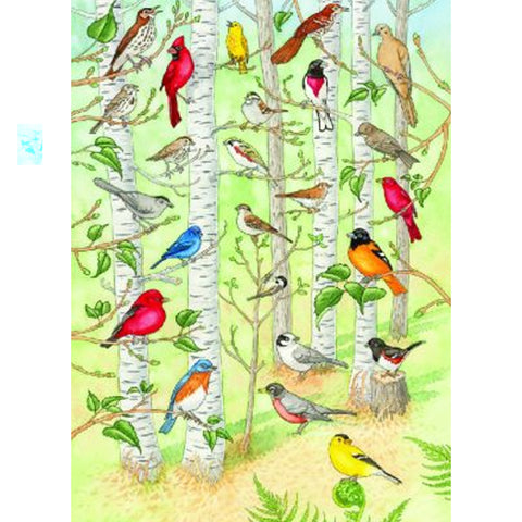 Can You Name the Birds Poster