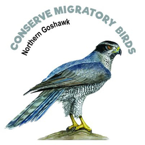 Northern Goshawk Tattoo