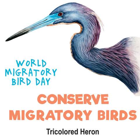 Tricolored Heron Tattoo