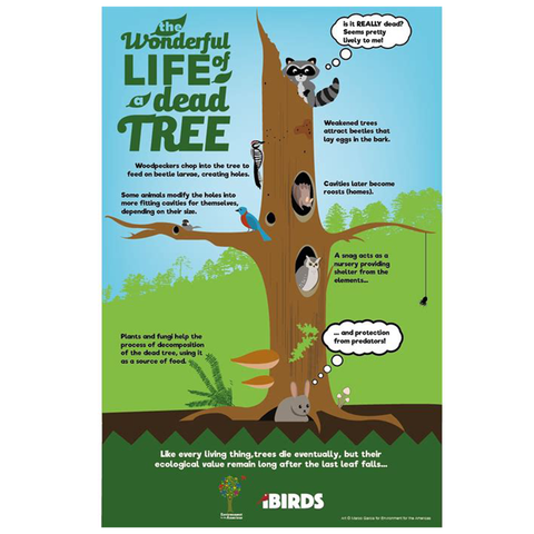 The Wonderful Life of a Dead Tree Poster