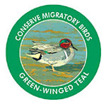 Green-winged Teal sticker