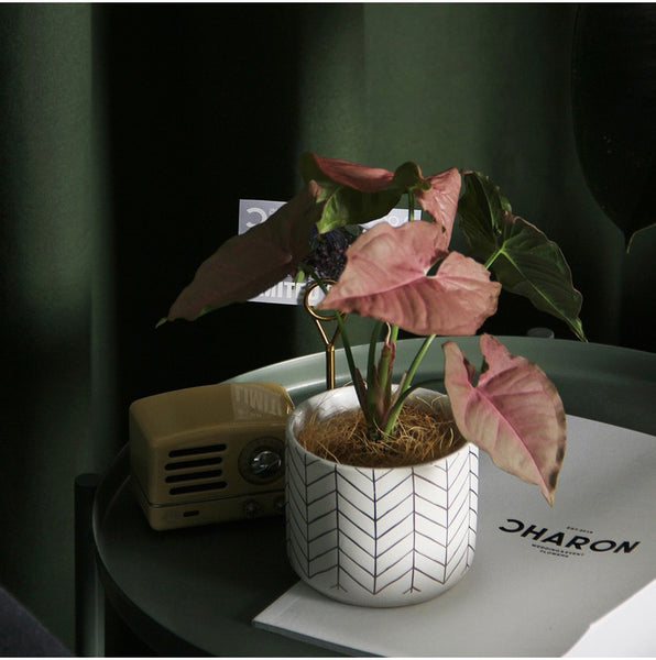 Nordic Ceramic Flower Pot Indoor