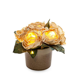 Arcadia Clera & Yellow Led Bunch
