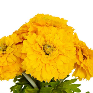 Marigold Yellow Flower