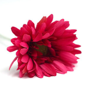 Sunshine Gerbera Red Flower