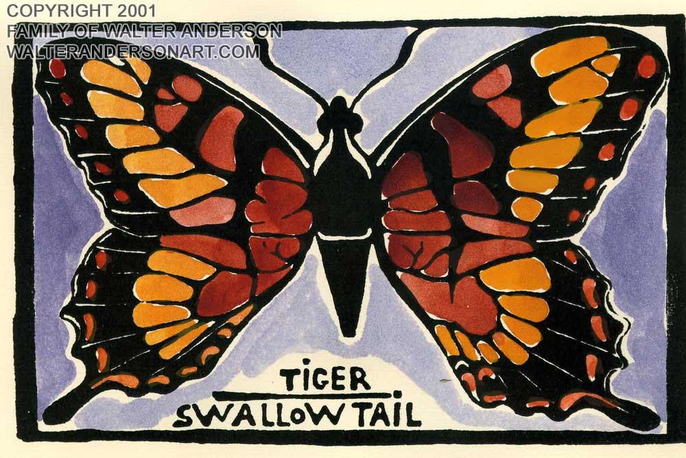Butterfly; Tiger Swallowtail