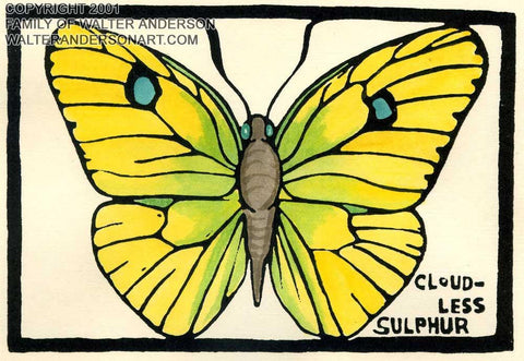 Butterfly; Cloudless Sulphur