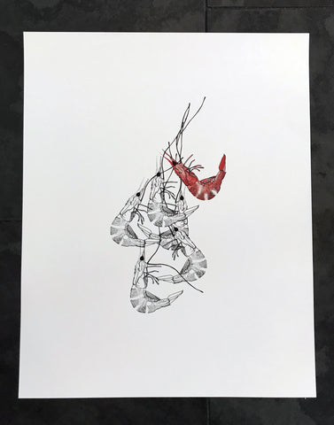 Shrimp Watercolor Print