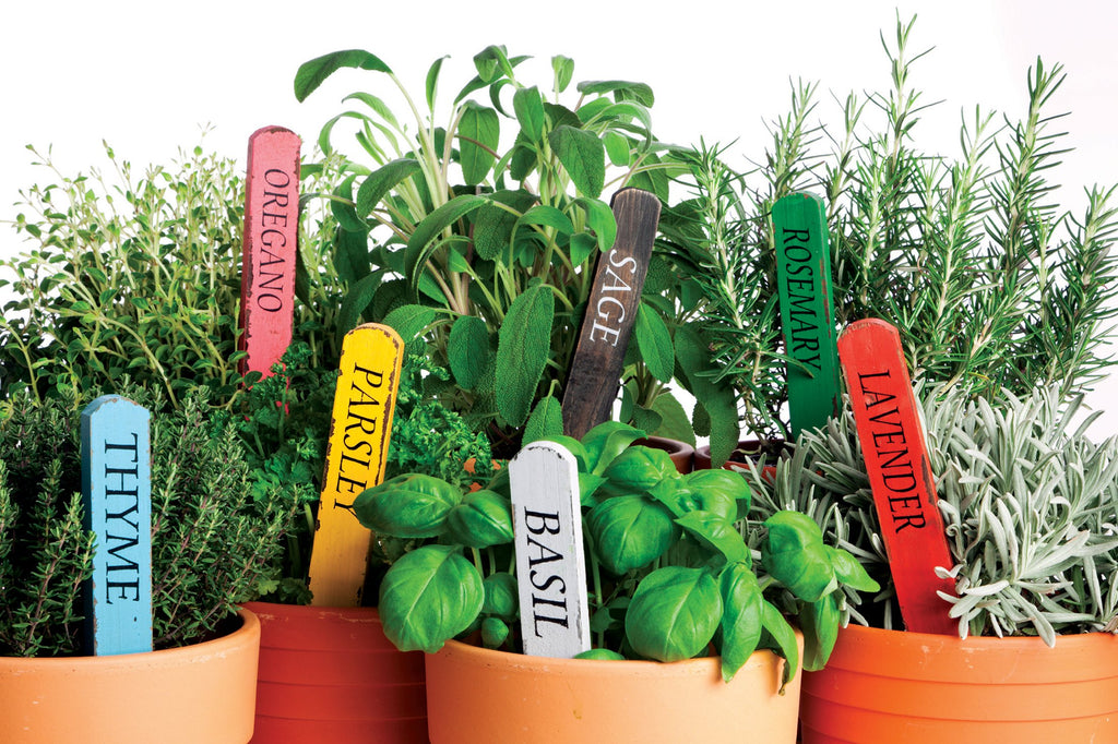 terra cotta pots filled with fresh herbs and colorful plant labels